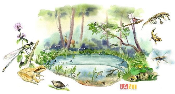 illustration, mare, zone humide, sentier d'interprétation, pédagogique, panneau, nature