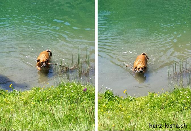 Seebergsee - Hund mit Stöckchen