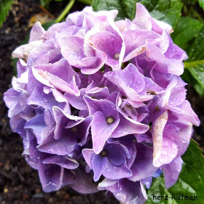 12von12 Juli - Blume