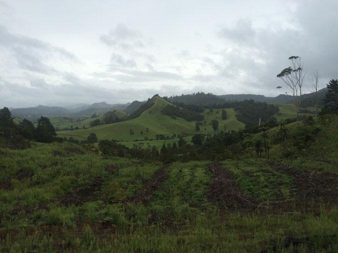 Sur la route de Rotorua