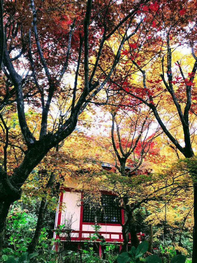 福島市 花見山公園