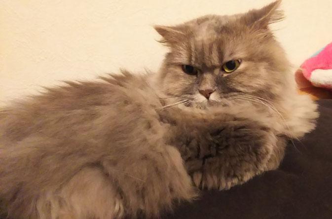 猫横たわる
