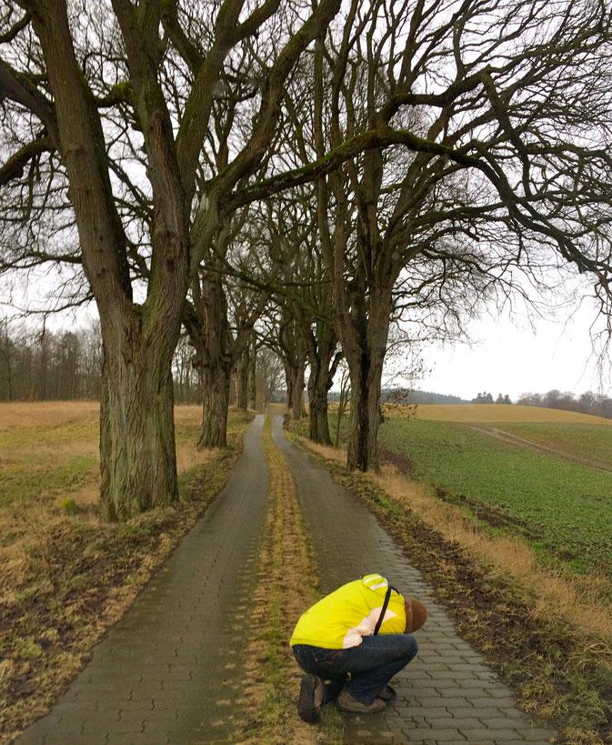 Baumallee in Mecklenburg Rad fahren Wandern
