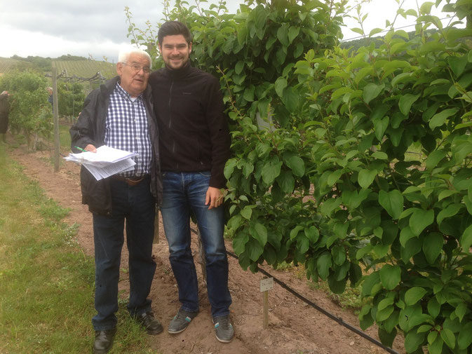 Kiwibeeren, Kiwipflanzen - wir sind die Experten
