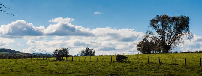 Wolken, Kopfweide, Weidezaun Weite