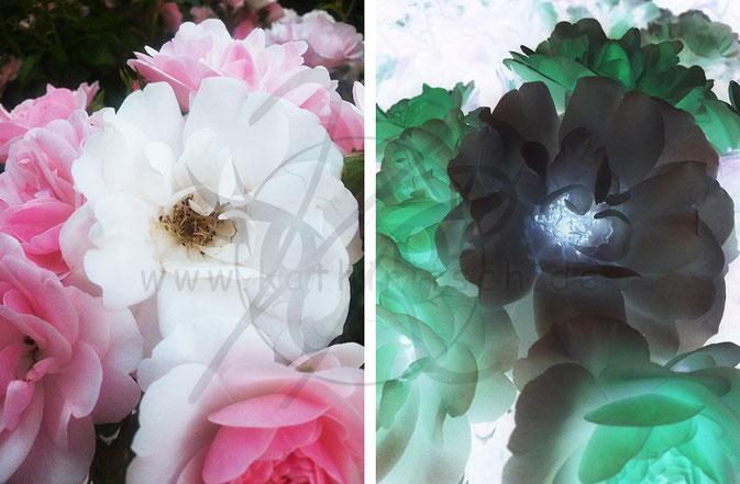 Schneeweißchen im Rosenrosa und Schwarzel im Rosengrün