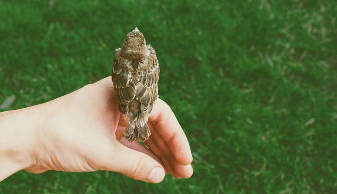 飛び立とうとしている鳥
