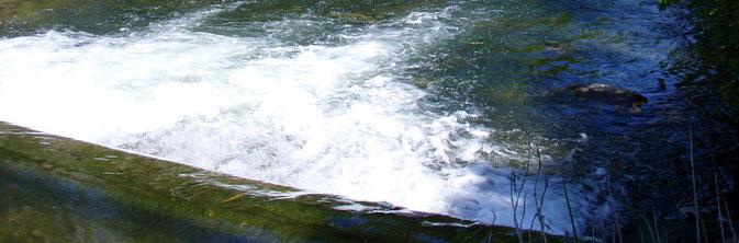 Fliegenfischen Gürbe, Müsche, Belp, Toffen, Forellen, Barbe, flyfishing Switzerland, Schweiz, Pachtgewässer, Angeln, Fischen, Aare, Belpmoos, Flughafen Belp,