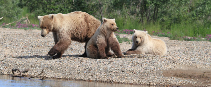 Brown Bear Moraine Creek