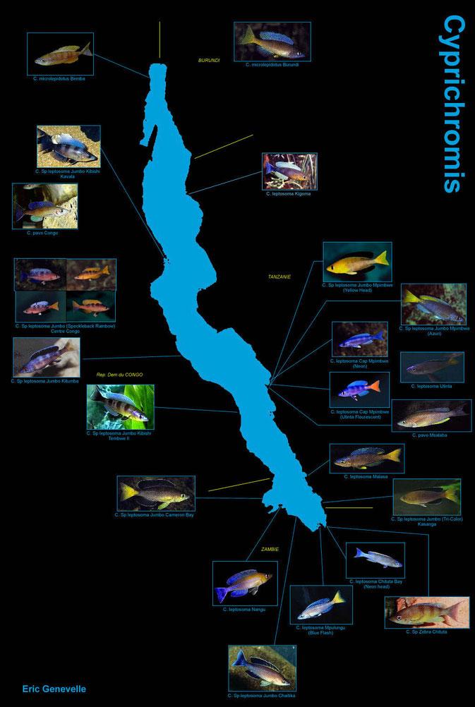 Карта Cyprichromis www.destin-tanganyika.com