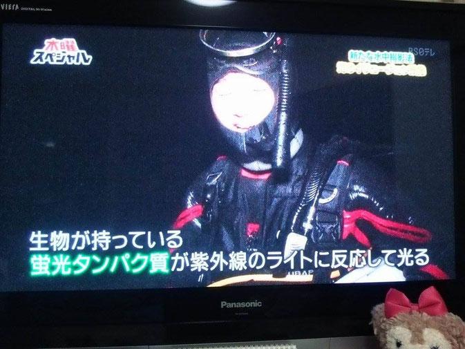 テレビ出演 木曜スペシャル 蛍光発光フローダイビング