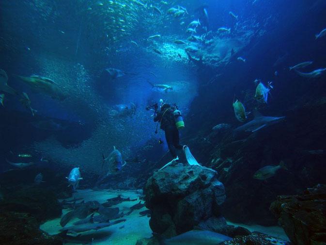 広告水中写真撮影業務 福岡の水族館マリンワールドさま