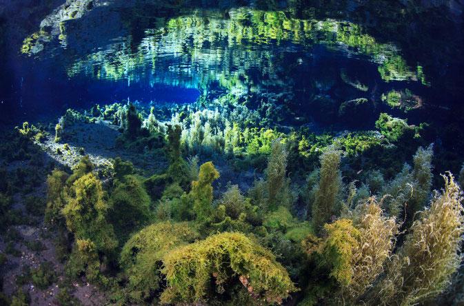 撮影地:熊本県南阿蘇村 白川水源
