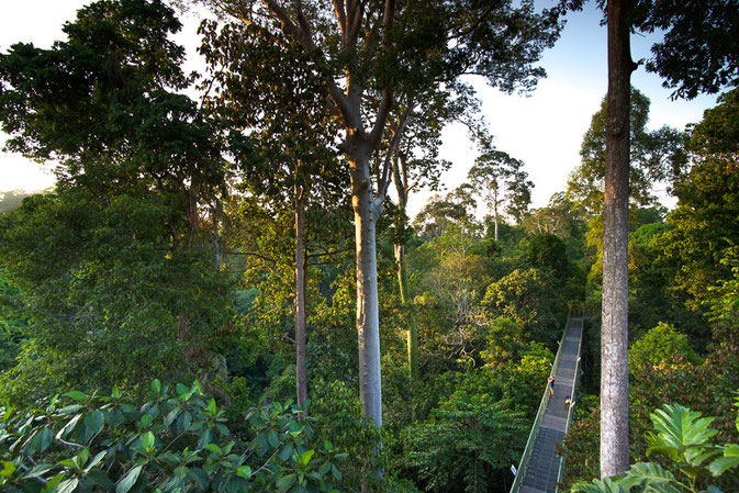 Rainforest Discovery Center, Sepilok, Borneo - The Ultimate 3 Day Guide To Visiting Sepilok, Borneo  © Nussbaumer Photography @nussbaumerphoto @Mafambani
