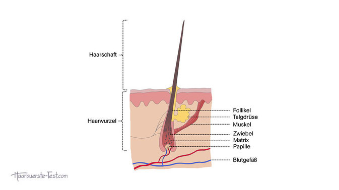 Folsäure Haare, wofür ist folsäure gut, was ist folsäure