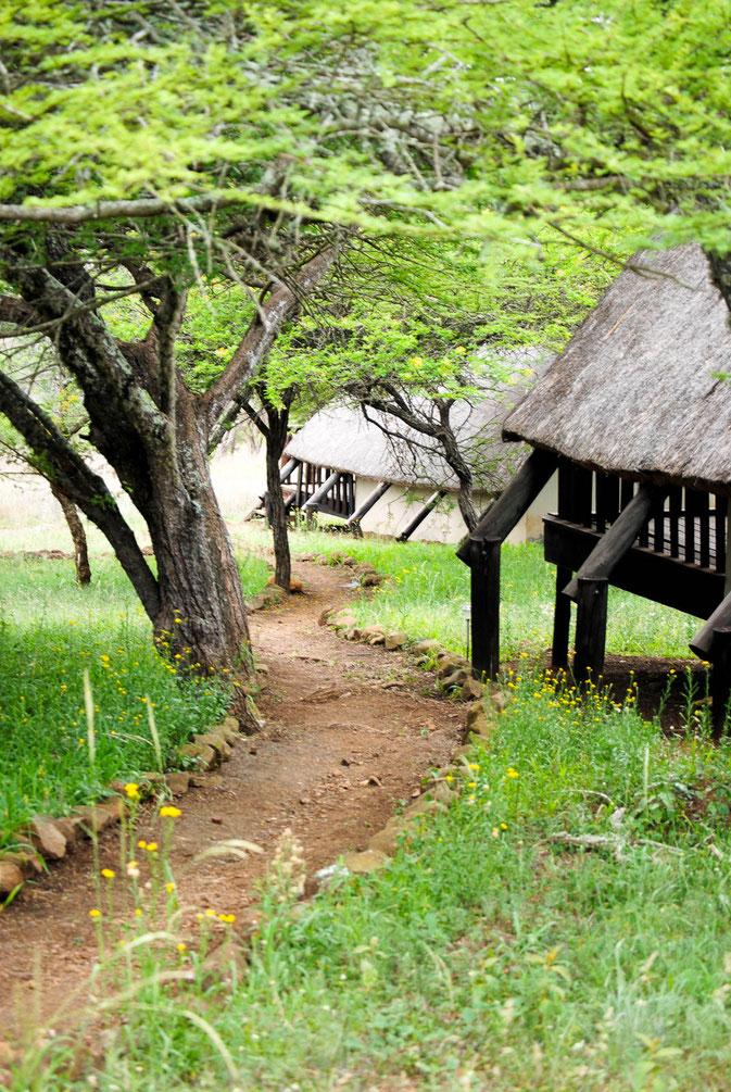 Auf dem Gelände der Ulwazi Lodge, die Wege zu den verschiedenen cabins