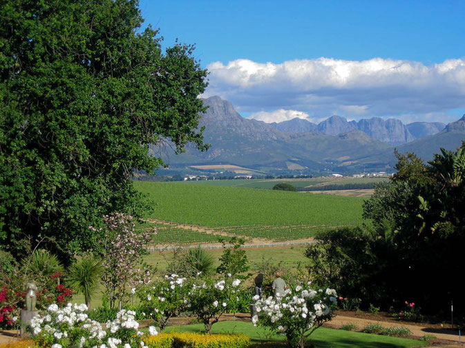 ....in die Winelands rund um Stellenbosh