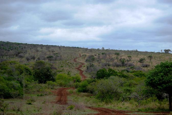 Viele Wege führen durch's Thanda Privat Game Reserve