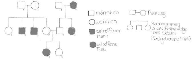 Abb. 2: Beispiel Stammbaumübersicht
