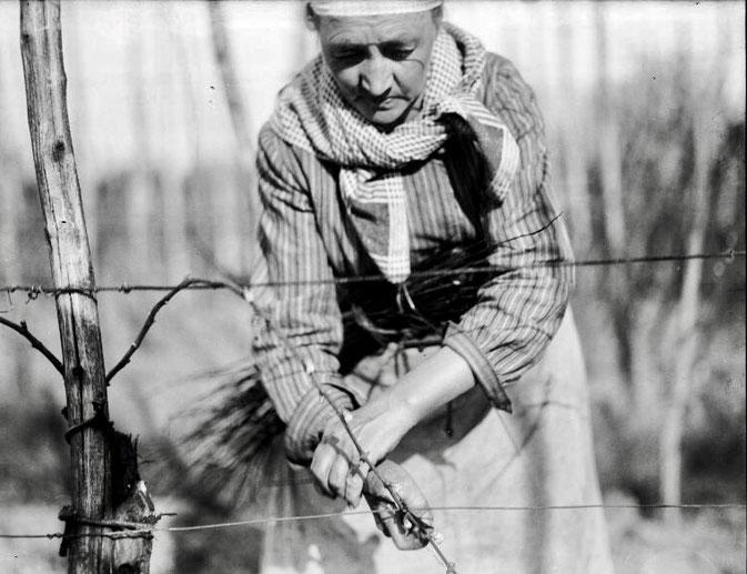 Le liage de la vigne, photographie Lucien BLUMER (1871-1947), Fonds Blumer, Archives de la ville de Strasbourg et de l'Eurométropole
