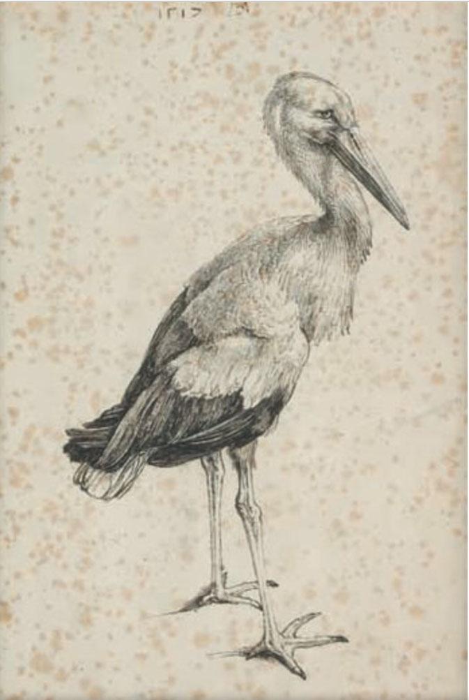 La cigogne, gravure de Albrecht Dürer, 1503, Musée d'Ixelles