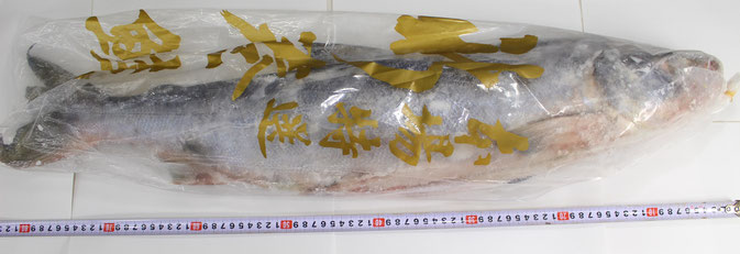 新巻鮭6尾