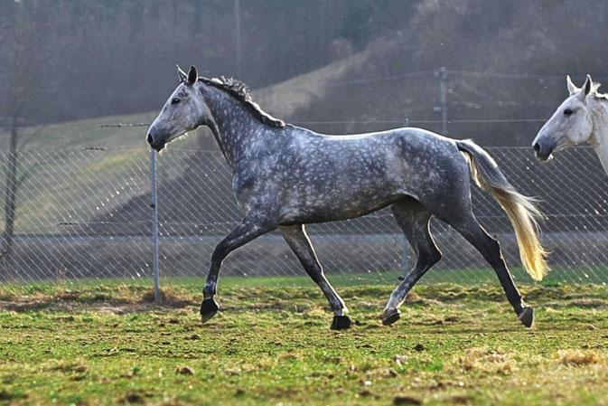Pferdeshooting, Pferdefotografie, Oberösterreich, Eva Richter, Freude schenken, Spaß, Richter-Kernreich