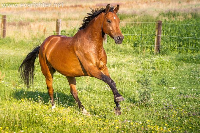 Pferdeshooting Richter-Kernreich Pferd-Vital-Coach