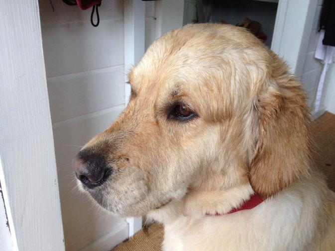 Urlaub mit Hund bei Bad Bevensen - der Wald beginnt vor der Tür
