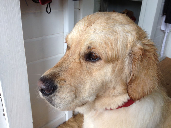 Urlaub mit Hund in Bad Bevensen - bei uns im Land-gut-Hotel Waldesruh