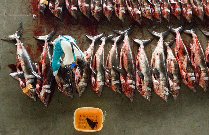 shark finning hong kong