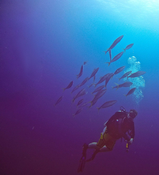 tips on diving in Micronesia