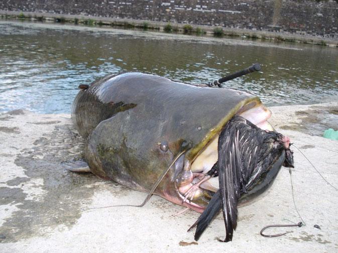 Картинки большая рыба