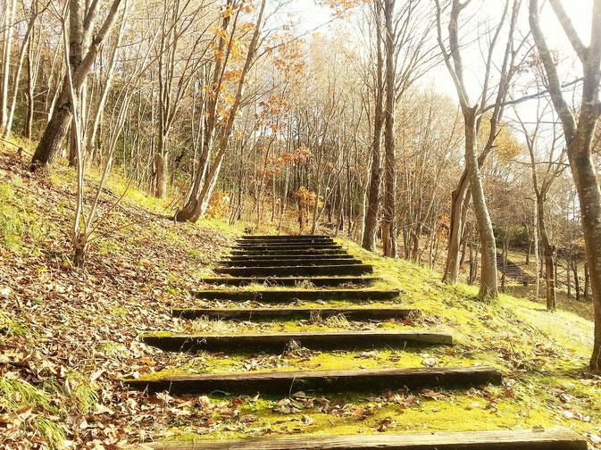ファーブルの森