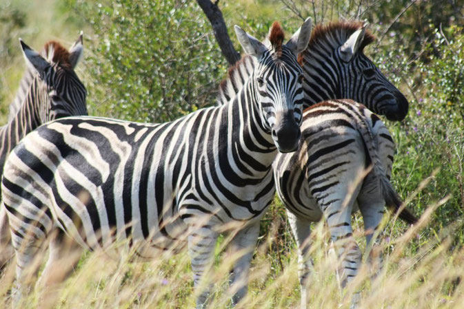 Kruger & Panorama Tour Add On - Design your Dream - Africa Volunteer Adventures