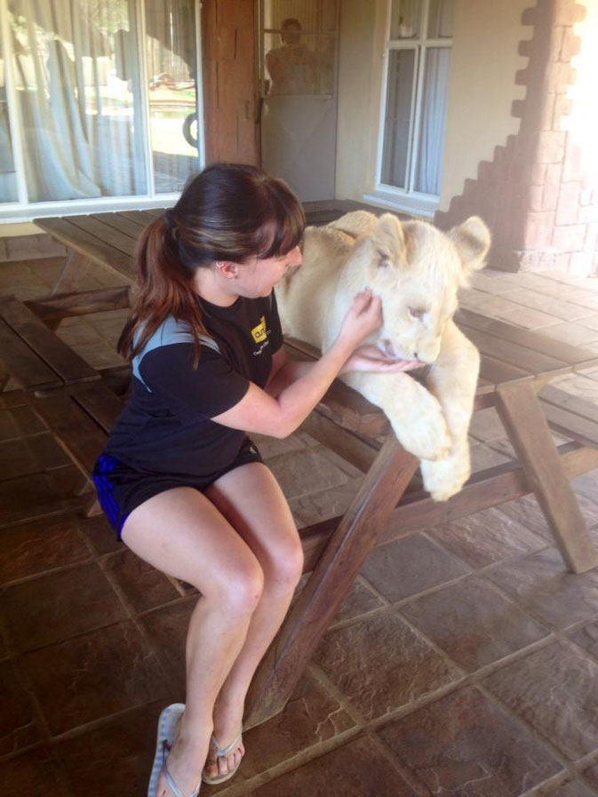 Amber and a lion at Buntle Ba Project with Africa Volunteer Adventures