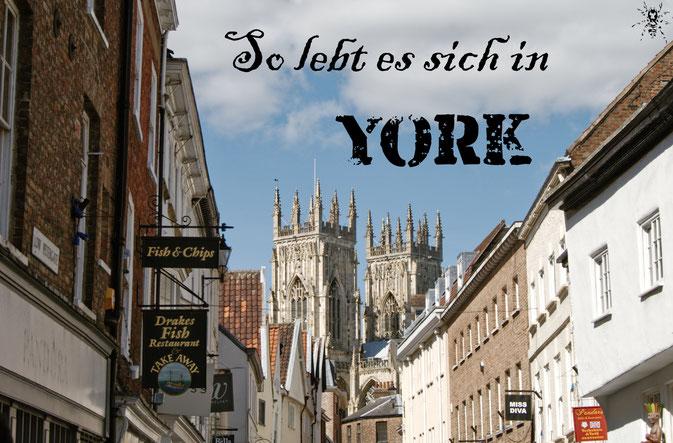 So lebt es sich in York - Minster und Fish & Chips - Zebraspider DIY Blog