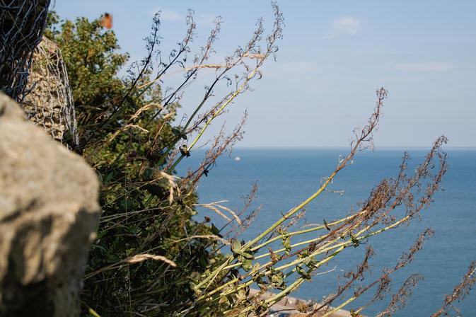 (M)ein Tag am Meer - Scarborough Meerblick - Zebraspider DIY Blog