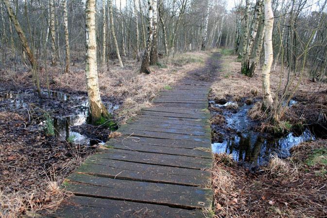 Brücke im Venner Moor