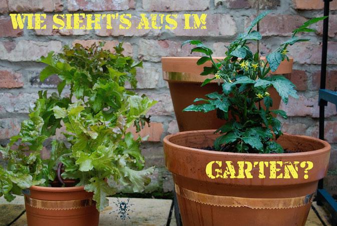 Wie sieht's aus im Garten? - Zebraspider DIY Anti-Fashion Blog