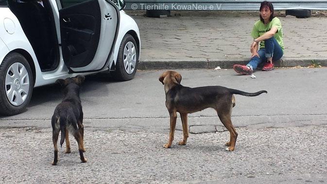Straßenhunde in Bulgarien