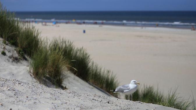 Strand von Nes auf Ameland