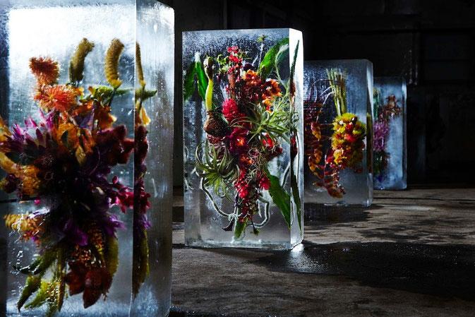 Azuma Makoto, Exposition Iced Flowers, le 10 et 11 janvier 2015, à Saitama (Japon)