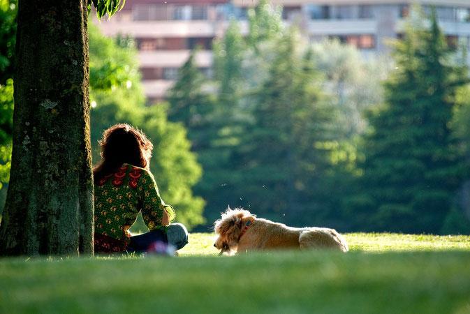 Mensch Hund Beziehung