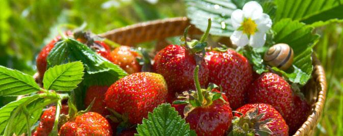 Le fragole nella dieta dimagrante