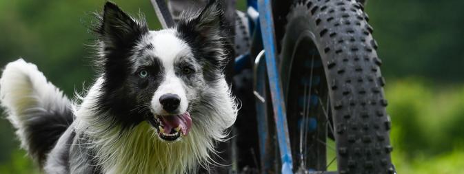 fietsen met je hond