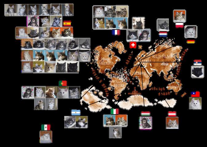 Gatitos Frozen Lands por el mundo