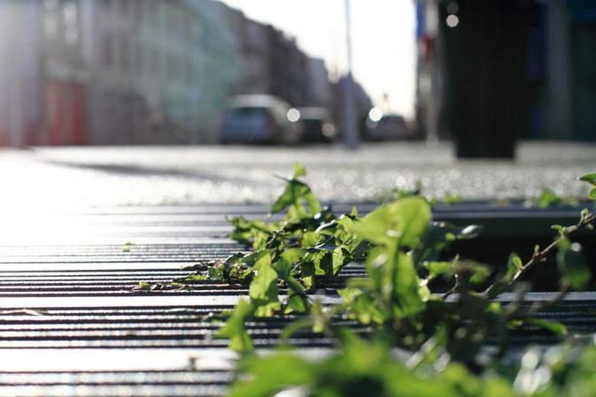 Invasion végétale