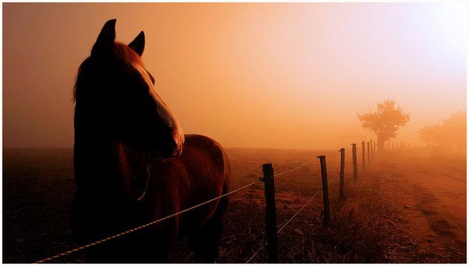 Quelques part sur Brignais, dans une prairie couverte par les premières gelées de l'année et éclairée par le soleil levant.