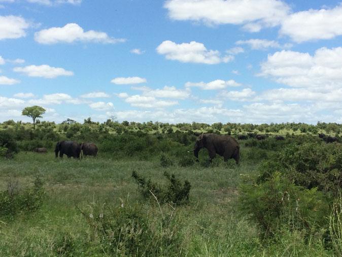 Kruger National Park, Südafrika, Reisen, Travelblog, Reiseblog, Natur, Big 5, Afrika, Safari
